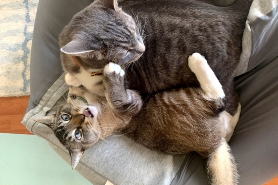 猫が吐いたものに毛の塊があるのは平気?