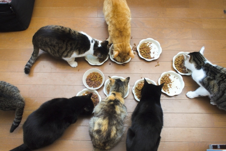 多頭飼いのダイエットは難しい?