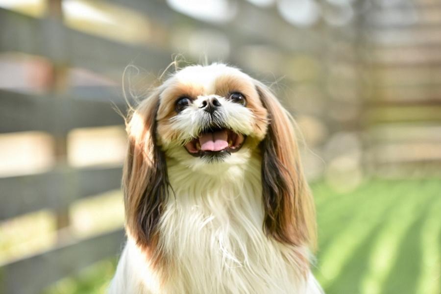 犬の尿路結石は食事が原因?
