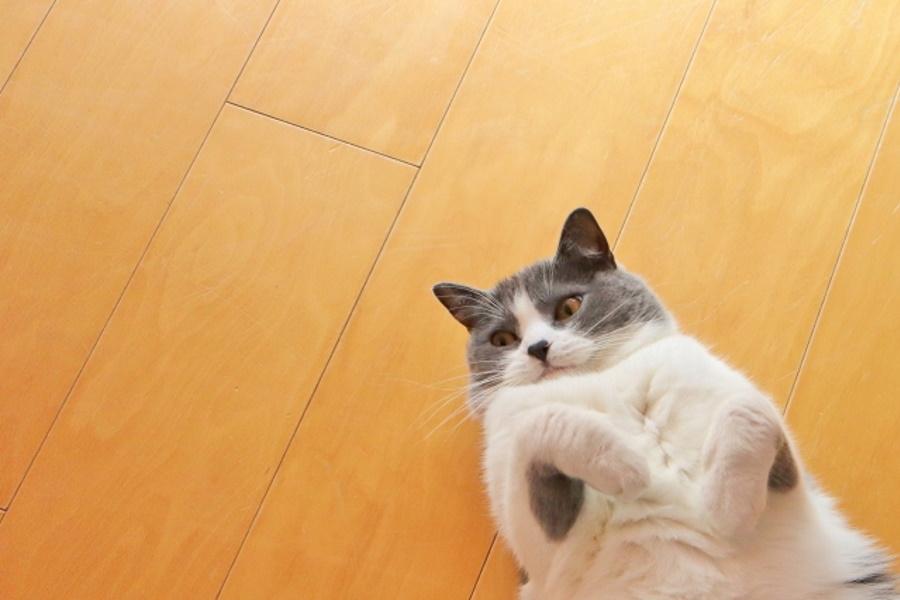 運動しない猫は太る