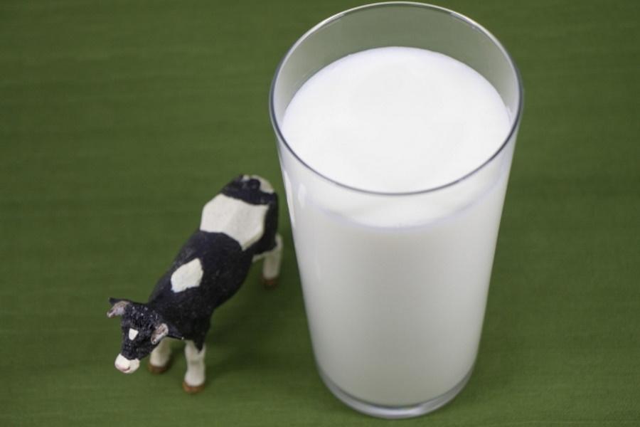 猫にミルクをあげていいの?