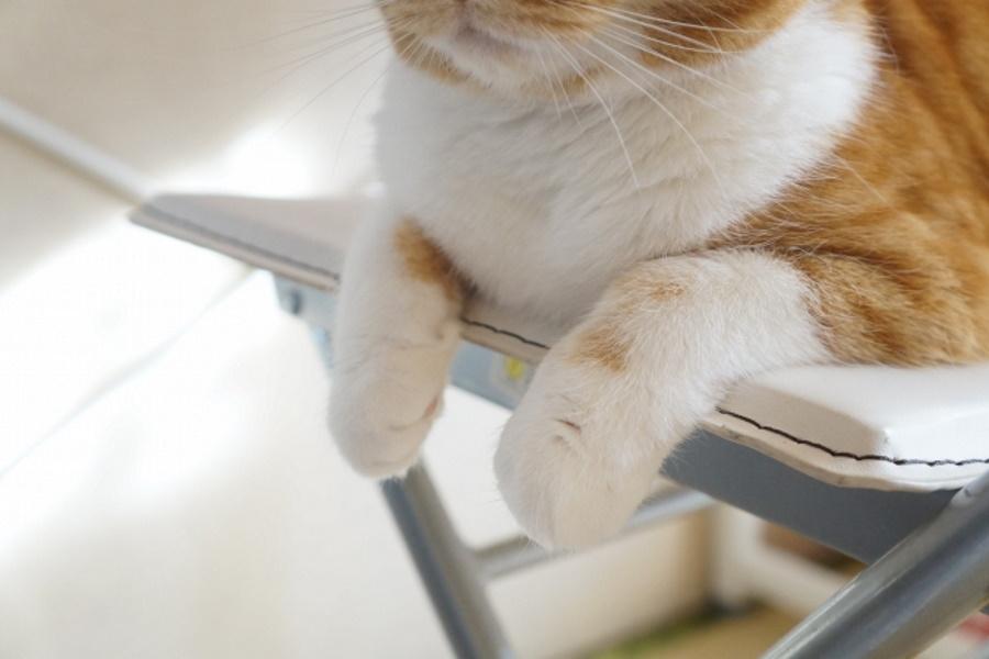 猫を飼うデメリット