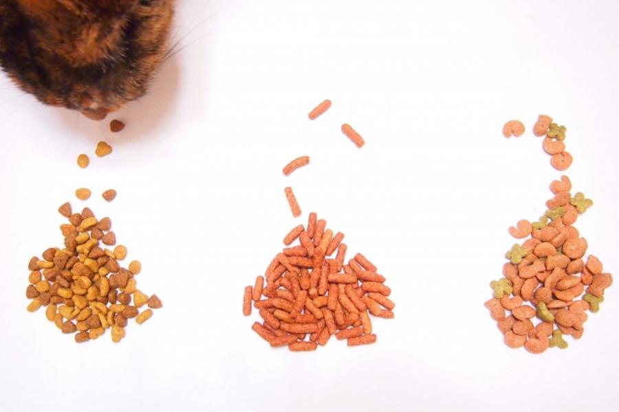 猫のダイエットのための食事