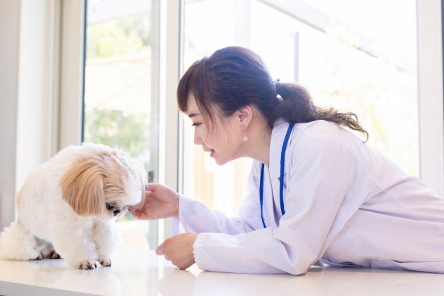 犬の避妊手術の流れ