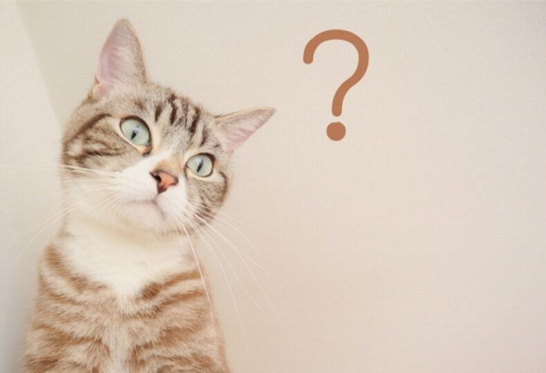 猫に置き餌をしてもいい?置き餌によるリスクや止め方について紹介!