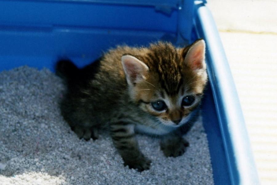 猫の下痢・軟便などの症状