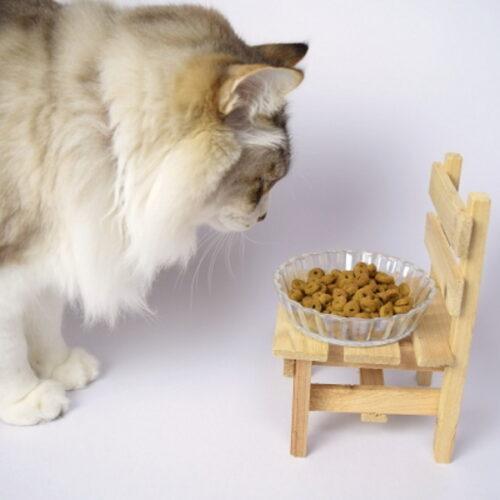 猫の吐き戻しの原因とは?猫の病気や吐き戻し対策について紹介!