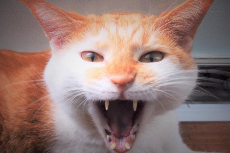 猫ボケ症状
