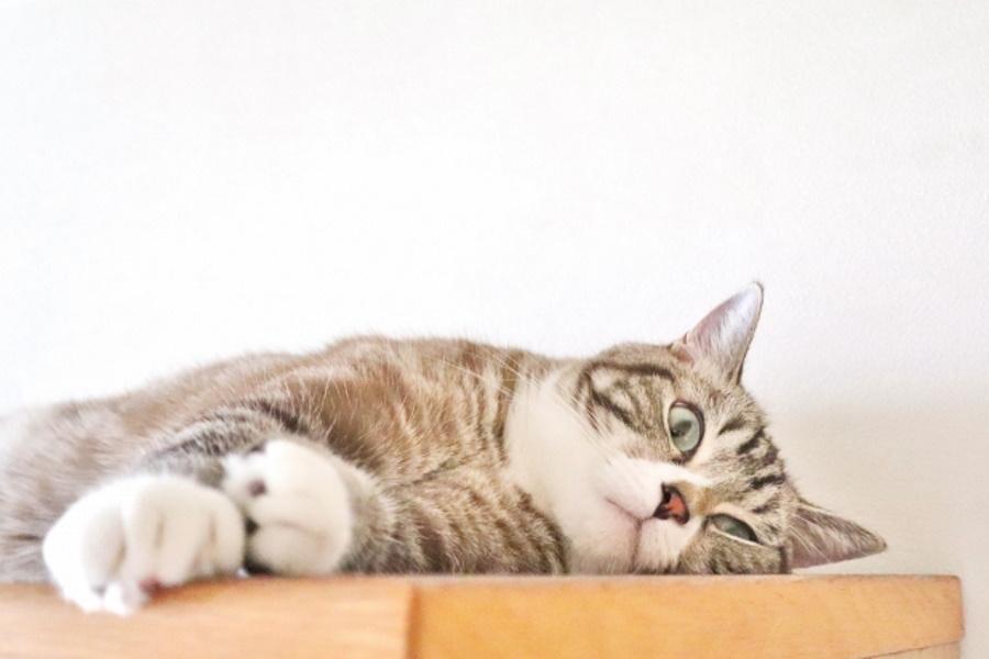 高齢猫の特徴