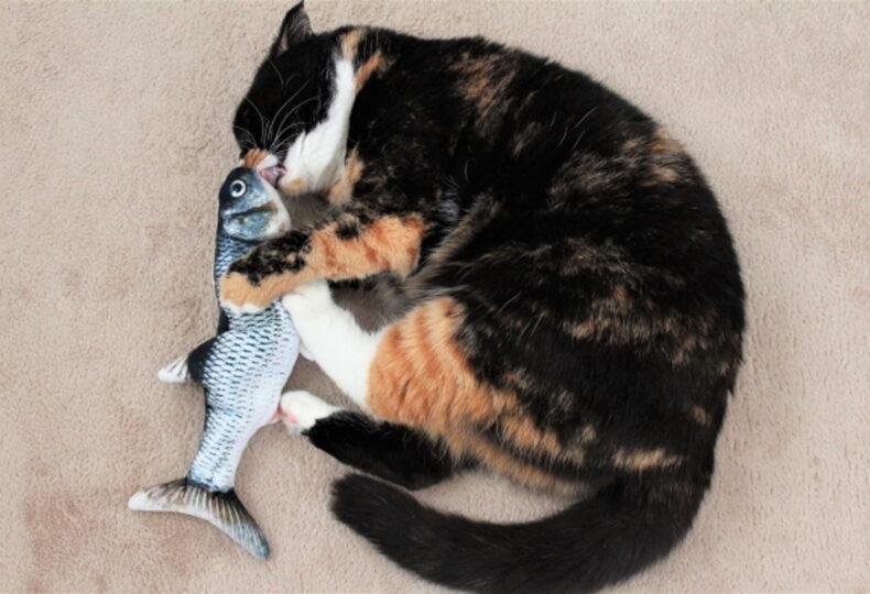 猫に生魚は危険?猫に魚をあげるために知っておくべきこと!