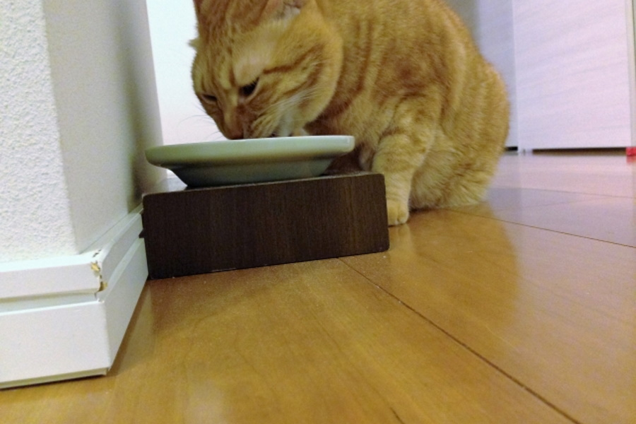 猫が食べるご飯が少ない場合