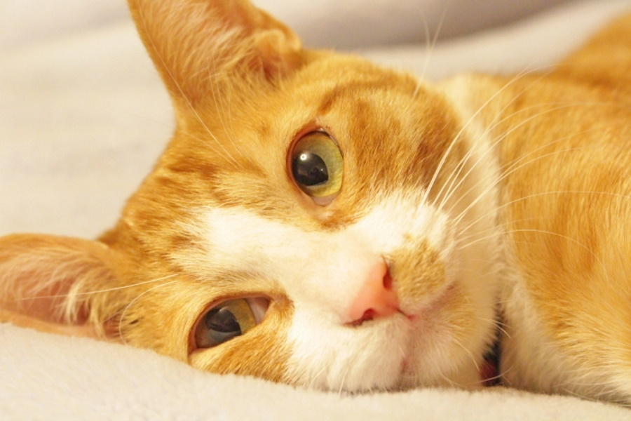おすすめの猫用歯磨きグッズ