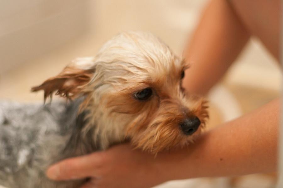 犬をお風呂に入れないとどうなる?