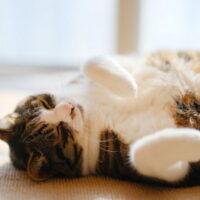 猫は暑さに弱い?猫にとっての快適な気温・暑さ対策を紹介!