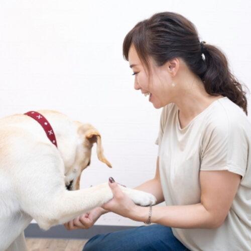 犬をしつける方法とは?犬をしつける目的や手順について解説!