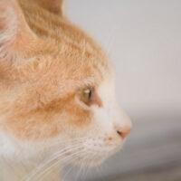 猫の免疫力を高める方法とは?猫の感染症・免疫力を上げる方法を紹介