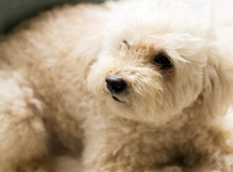 小型犬の費用はいくら?生涯にかかる費用や、月々の食費などを紹介!