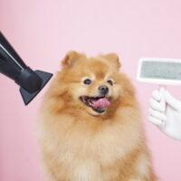 犬のドライヤーはどうやるの?乾かし方のコツや注意すべきこと