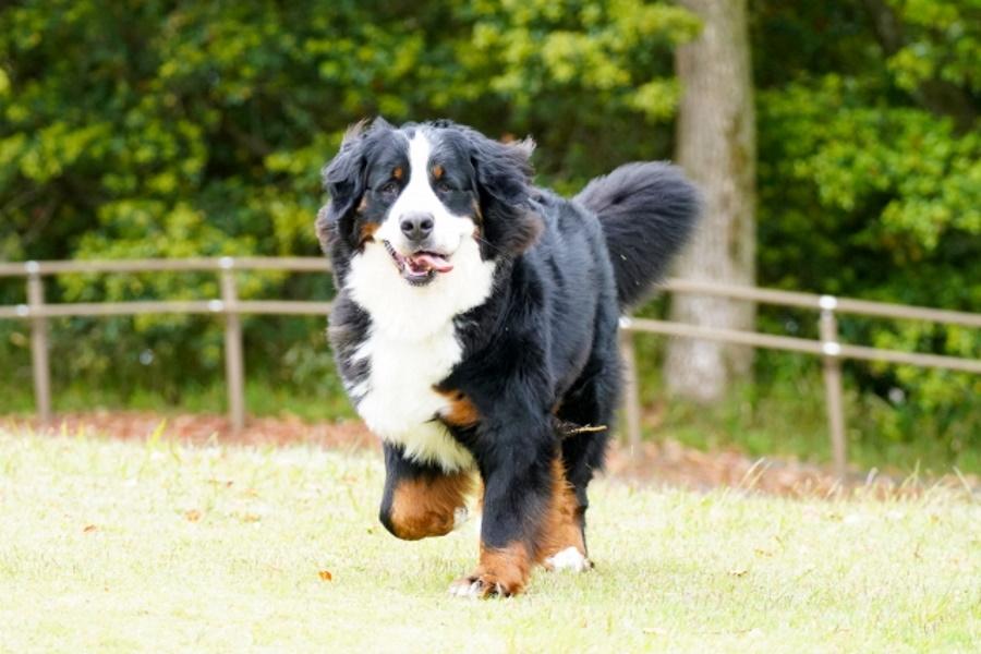 大型犬にかかる飼育費用