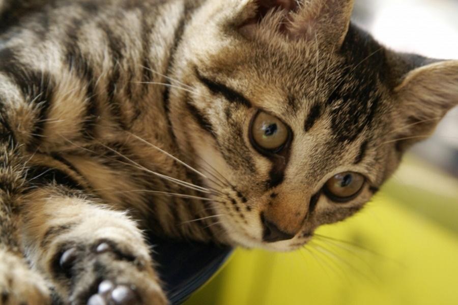 猫は胃腸炎を自然治癒できる?