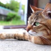 猫の行動の意味とは?猫の習性や、甘えてくる時・嫌いな人にとる行動