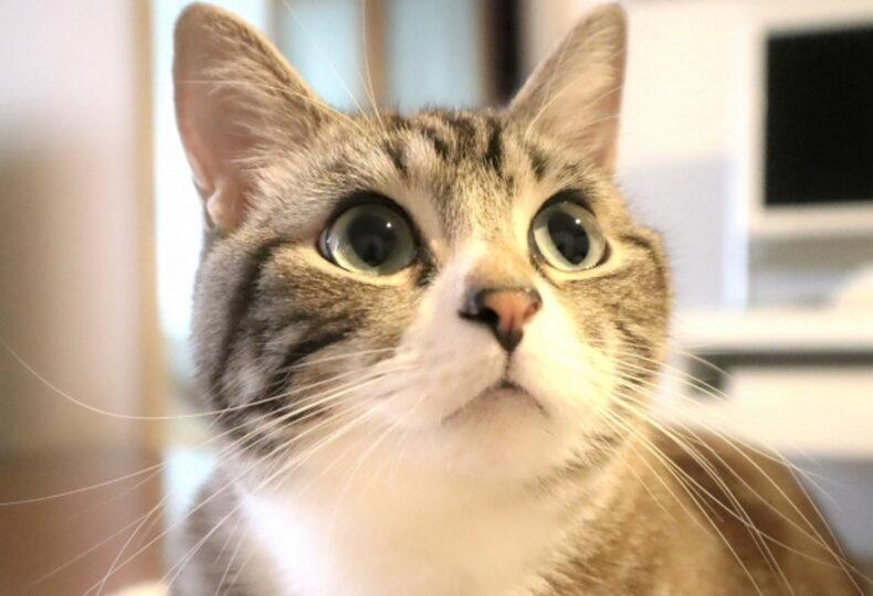 猫の糖尿病の症状とは?糖尿病になる原因・食事の選び方を解説!