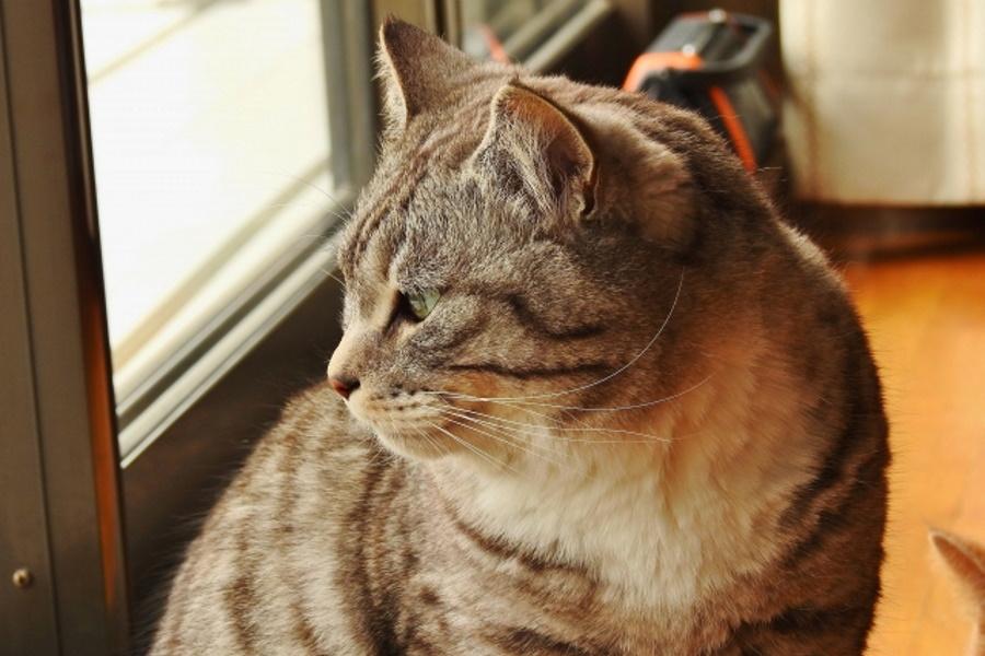 糖尿病になった猫の寿命