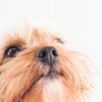 犬の歯周病の治療費とは?重度の歯周病の症状や治療方法を紹介