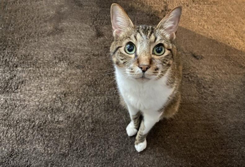 猫は旅行中に留守番できる?留守番あるある・トイレやご飯の注意点