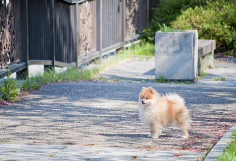 犬が脱走したら?犬が逃げたときに取るべき行動・脱走対策を紹介!