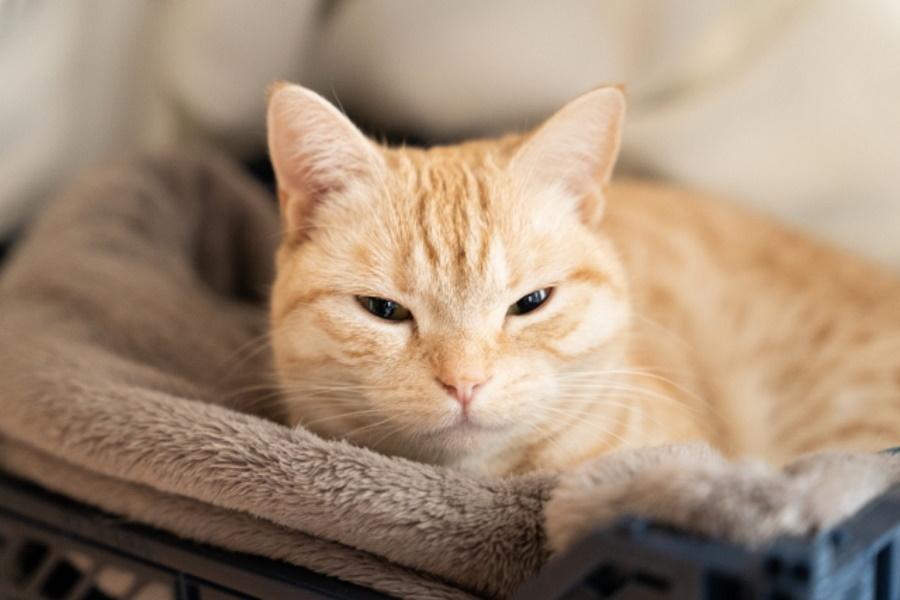 猫の平熱が低い