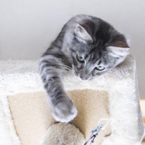 猫の運動量の目安とは?運動しないリスク・運動不足を解消する方法