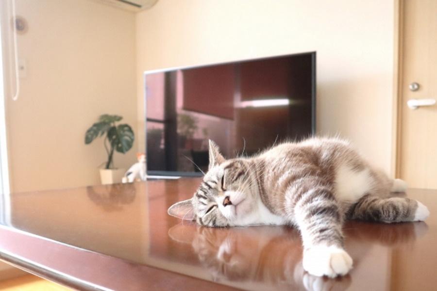 猫の平熱が高い