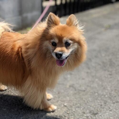 犬の毛が抜ける原因とは?考えられる病気や抜け毛対策について紹介!