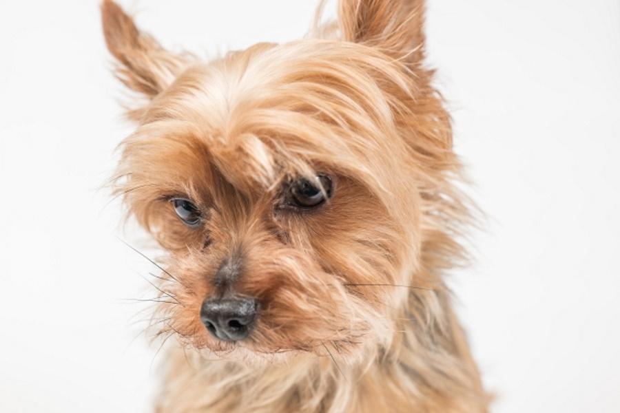 犬の介護施設