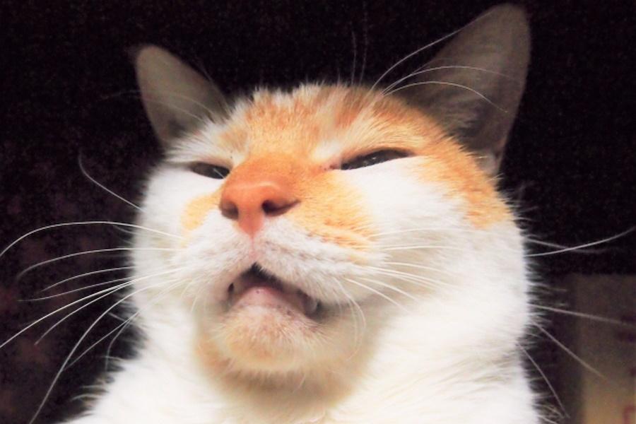 猫の口が生臭い原因