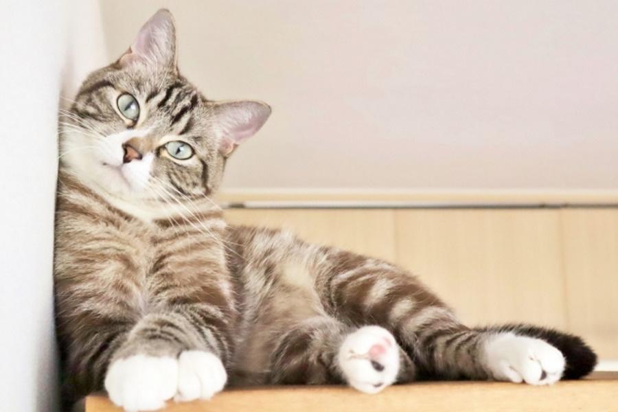 猫は妊娠すると甘える?