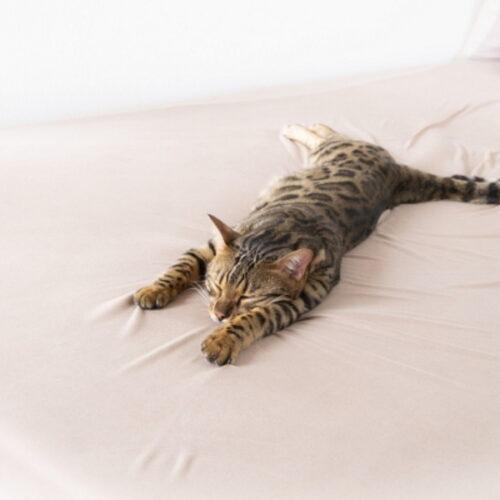 猫の平熱は何度?猫の熱や低体温症の対処方法・予防方法を紹介!