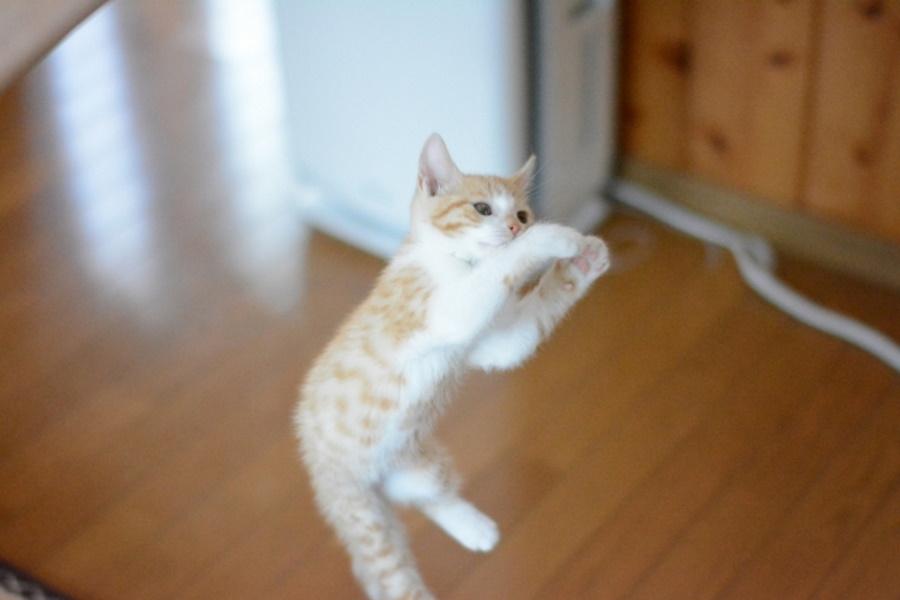 猫が喜ぶおもちゃ