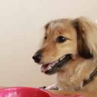 犬のダイエット【食事編】食事制限のやり方・ダイエットに良い食べ物