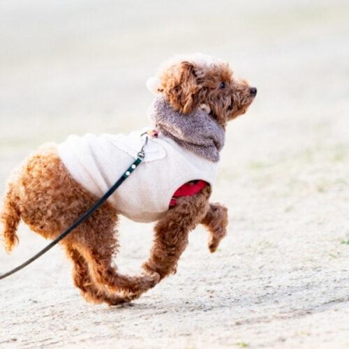 犬のダイエット方法!犬が太る原因・効果的なダイエット方法