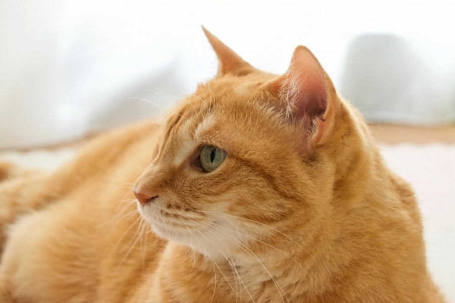 猫の夏毛と冬毛の違い