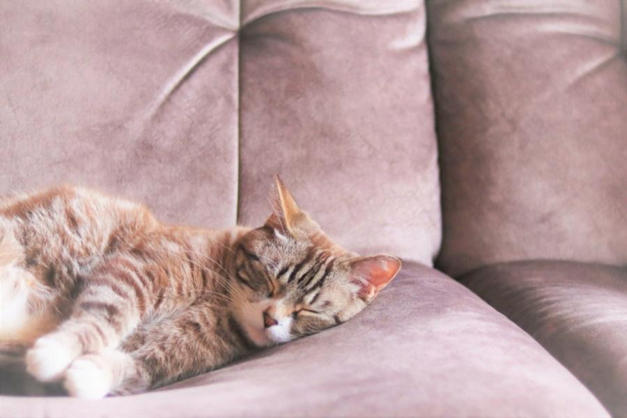 猫が喜ぶ撫で方