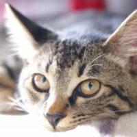 猫の流動食の与え方!流動食の作り方・注意すべきことを紹介!