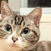 猫のスプレー行為とは?発情期の猫の特徴や、スプレー行為対策!