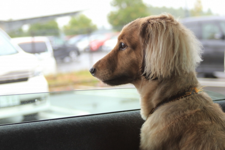 犬が車酔いしたときの症状