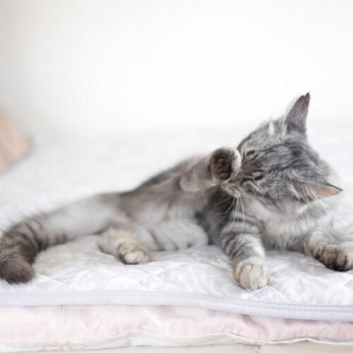 猫がはげる原因とは?はげる理由・考えられる病気を部位ごとに紹介!
