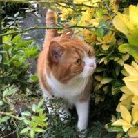 猫が外に出たがる理由とは?外に出すリスク・脱走させないための対策