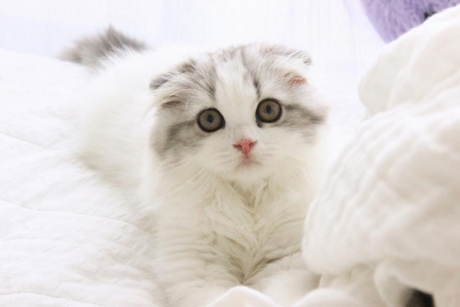 猫のお迎え前日までにできる事