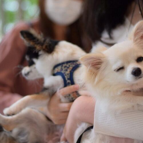 犬の抱っこの仕方を解説!サイズごとの抱き方・危険な抱っこを紹介!